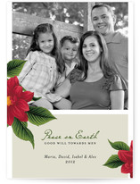 Peace Poinsettia Christmas Photo Cards