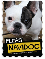 Fleas Navidog Christmas Photo Cards