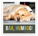 Bah Humbug Christmas Photo Cards
