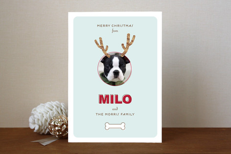 Reindog Christmas Photo Cards