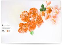 Grace Desktop Wallpaper