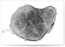Tree Ring by Mackenzie Darrach