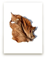 Brown Leaf Study #1 by Jonathan Brooks