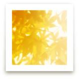 sun bathing leaves by amy chapman braun