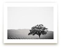 Wild Oak by Lindsay Ferraris Photography