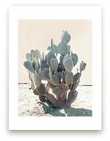 Blue Cactus
