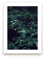 Forest Focus