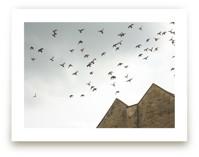 Lost in Flight by Margaret Edith