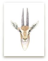 African Gazelle