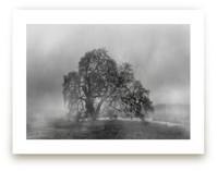 in the rain by Crystal Lynn Collins