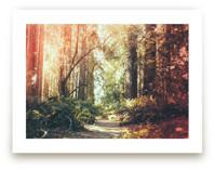 Redwoods Path by Elena Kulikova