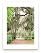 Spanish Moss by Lindsay Madden