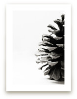 Pine Cone by Alexis Arnold