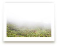 Tea in the Fog