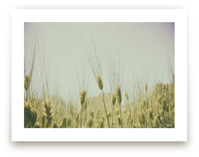 Golden Grass by Alexis Arnold