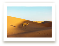 Your camel awaits by Jacquelyn Sloane Siklos