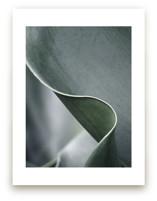 Botanic 3 by Stellax Creative