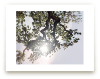 Elegant Oak Tree