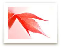 Raindrops on red leaf