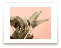 Tropical Banana Leaf Print