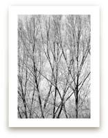 Winter Trees by Magdalena Kucova
