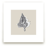 Seashell 4 Art Prints