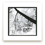 Tree Art Prints