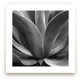 California Succulent Art Prints