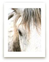 Wild Horse Eye by Michelle Detering