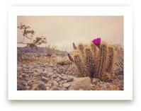 Rock On Little Flower by Jess Santos