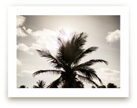 Shadow Palm by neverforgetdesign.