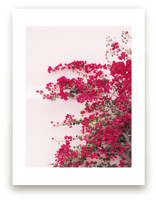 Bright Bougainvillea by The One With Wanderlust