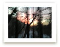 Sunset Forest by cassie adams