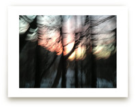 Sunset Forest
