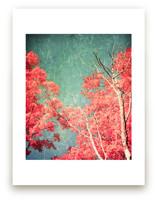 Enchanted Woods I by Caroline Mint