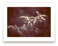 Marsala Flowers by Jen Florentine