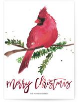 Christmas Cardinal by Kelsey McNatt