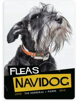 Fleas Navidog Holiday Photo Cards