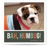 Bah Humbug Holiday Photo Cards