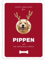 Reindog Holiday Photo Cards