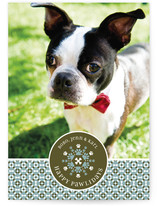 Happy Pawlidays Holiday Photo Cards