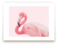 Flamingo Portrait III