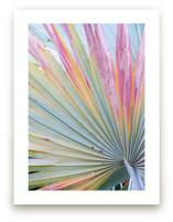 Colorful fan 2 by Eliane Lamb
