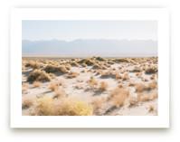Morning Desert Brambles