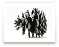 Pine Cone Black & White