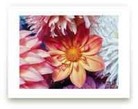 Dahlia Mix II by A Maz Designs
