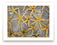 sea stars Wall Art Prints