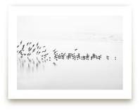 Flocking by Stephanie Sherman
