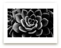 BW Succulent
