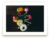 Ranunculus I by Keely Norton Owendoff